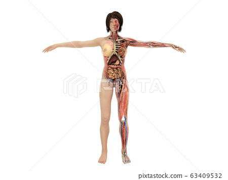 A woman body for books on anatomy 3d render image 63409532