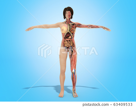A woman body for books on anatomy 3d render image 63409533