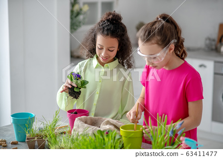 Two girlfriends transplanting violet at home together. 63411477