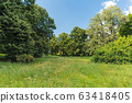 Trees and field with green grass. Beautiful meadow 63418405