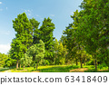 Edge of forest, field with green grass 63418409