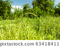 Blur background with green grass. Glade meadow 63418411