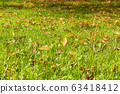 Autumn leaves on the green grass 63418412