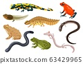 Amphibian vector illustration set, exotic cartoon tropical sitting toad and frog tadpole, salamander, triton icons isolated on white 63429965