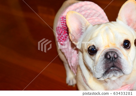 French bulldog 63433281