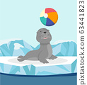 Seal cute sea animal on ice floe with ball 63441823