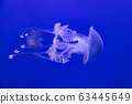 Jellyfish in the water 63445649