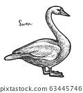 Sketch of white mute swan, wildlife cygnus 63445746