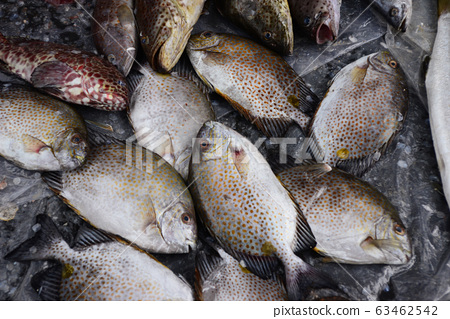golden rabbitfish Sell in fresh seafood market 63462542