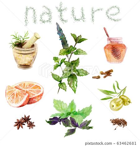 watercolor drawings of natural cosmetics: mint, basil, honey, olives orange plants 63462681
