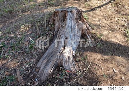 나무 그루터기 63464194