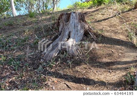 Tree stump 63464195
