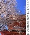 cherry blossom, cherry tree, five-storied pagoda 63471887