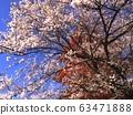 cherry blossom, cherry tree, five-storied pagoda 63471888