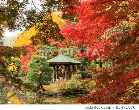 maple, yellow leafe, pond 63471970