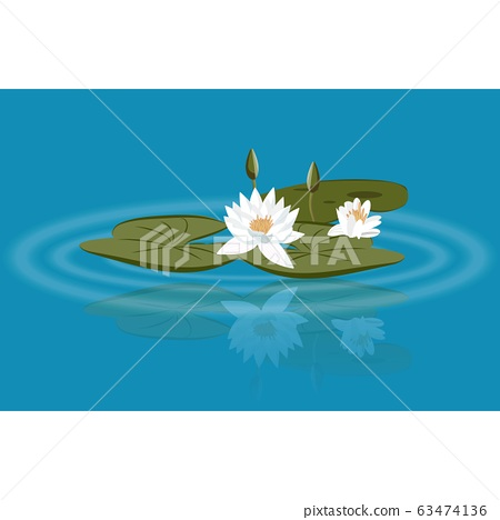 Water lily vector on the lake with leavs and flower buds 63474136