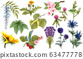 Watercolor herbal set of wildflower honey plants and flowers. Hand drawn botanical herbal collection of apple tree, linden, sunflower, lavender, blue thistle, clover, raspberry, dandelion, buckwheat 63477778