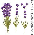 Watercolor lavender bouquet and single lavender flowers. Hand drawn floral set isolated on white. Honey herb 63477779