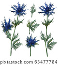 Watercolor thistle, blue thorn set. Hand drawn . herbal clip art of leaves and thistle flower. Honey herb illustration. 63477784