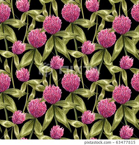 Watercolor pink  clover seamless pattern. Botanical hand drawn illustration of wild flower and leaves on black background. Honey meadow field. 63477815
