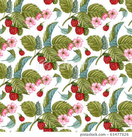 Watercolor raspberry seamless pattern on white. Raspberry berries and flowers pattern. Seamless pattern with hand drawn raspberry bush. 63477826