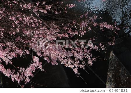 cherry blossom, cherry tree, sakura 63494881