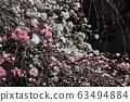 cherry blossom, cherry tree, sakura 63494884