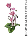 A small bouquet of watercolor pink cyclamen 63496403
