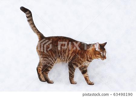 雞貓水彩插圖日本貓 63498190