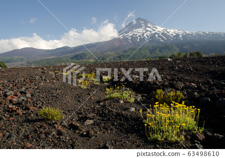 Llaima volcano in the Conguillio National Park. 63498610