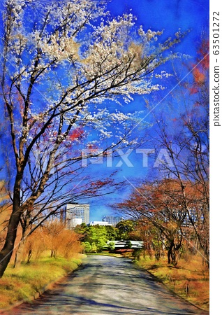 The cherry blossoms of the Imperial Palace East Garden and Ninomaru Garden. Thinge Oshima, Usgeoshima (March) Chiyoda-ku, Tokyo 63501272