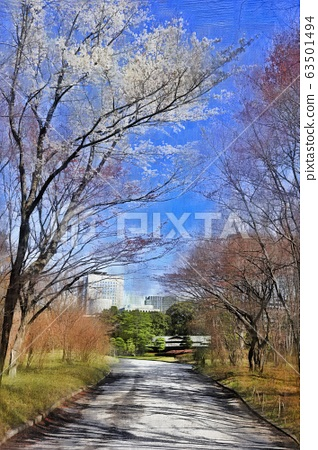 The cherry blossoms of the Imperial Palace East Garden and Ninomaru Garden. Thinge Oshima, Usgeoshima (March) Chiyoda-ku, Tokyo 63501494