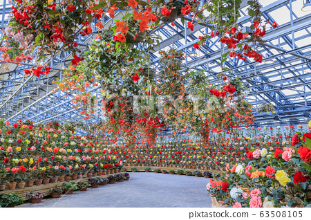 長野村海棠花園 63508105