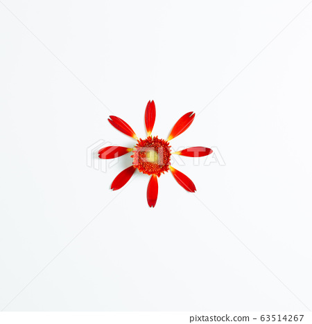 Red gerbera flower on white background. Floral composition, flat lay, top view, copy space 63514267