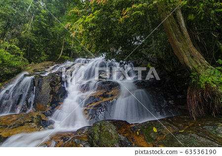 waterfall in lush surrounded by green forest 63536190