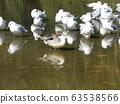 冬季候鳥來到稻垣濱公園和Uricamome 63538566
