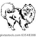 Decorative standing portrait of Dog Pomeranian 63548388