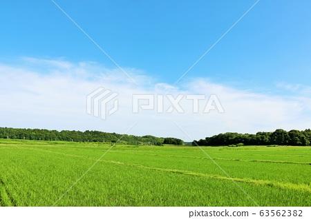 初夏的藍天和新鮮的綠色稻田 63562382