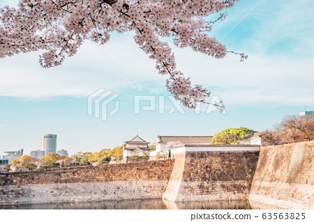 Cherry blossoms of spring at Osaka castle in Japan 63563825