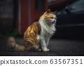 貓/CAT 63567351