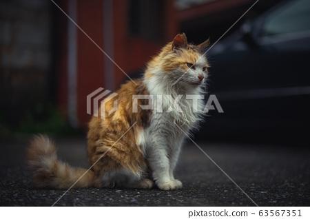 猫/CAT 63567351
