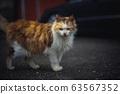 貓/CAT 63567352
