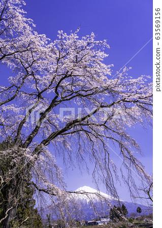(시즈오카 현) 후지 노미야시 · 센 코지의 사앵과 후지산 63569156
