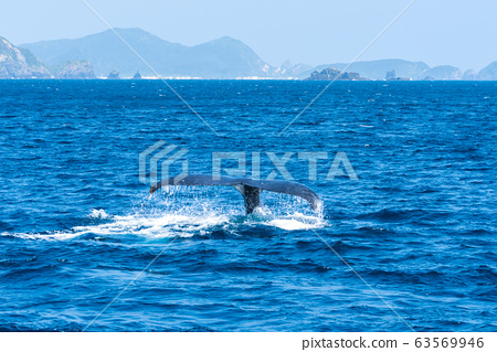 鯨魚看 63569946