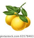 Grapefruit refinement 63578463