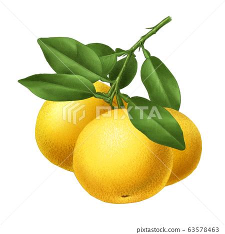 葡萄柚精製 63578463