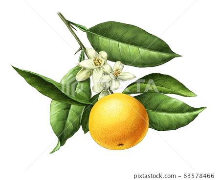Orange miniature 63578466