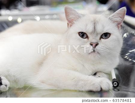 Cute cat at an international exhibition 63578481