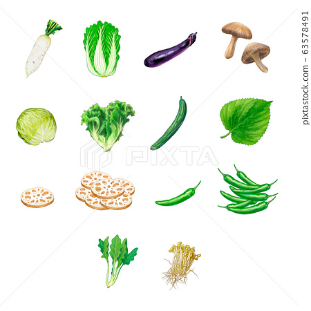 14 kinds of food vegetables 63578491