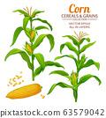 corn vector set 63579042